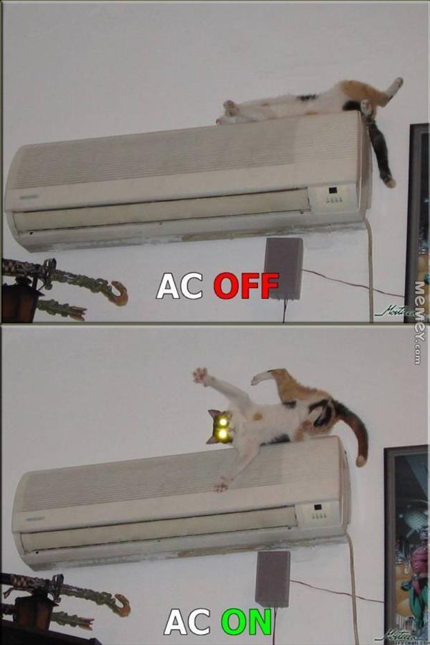 cat-ac.jpg