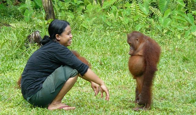 upset-orangutan_o_629638.png