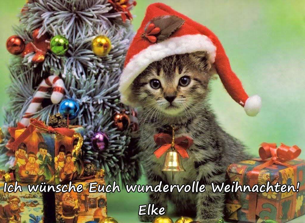 Weihnachtsmieze1.jpg